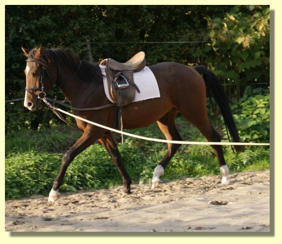 Pferd Reiten Ohne Sattel Reiten Mal Ohne Sattel Und